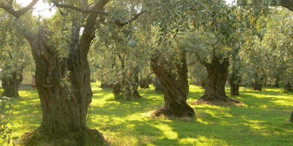 Epirus Olive Farm